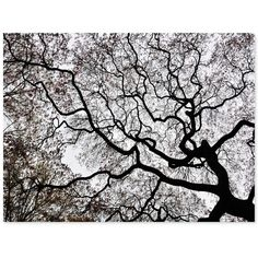 """'Japanese Maple Spring Abstract Ii' Canvas Print by Kurt Shaffer, 18"""" x 24"""" (€67) found on Polyvore featuring home, home decor, wall art, backgrounds, art, pictures, trees, filler, no color and wallpaper"""