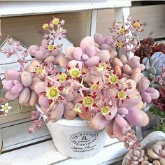 Chubby blooms! #leafandclay #succulents #succulove (: @limpopo_v_v_ )