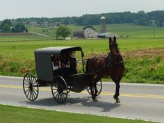 Amish horse buggy from Lancaster, PA.