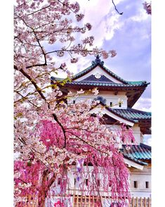 1043 When to go where... . April 27, Hirosaki Castle Park, Aomori, Japan . It's important to see cherry blossoms that where to go when. For your information: this year's dates (South to North) Kumamoto Apr 7–12 Hiroshima Apr 5–12 Kyoto Apr 7–15 Tokyo Apr 2–10 Sendai Apr 13–18 Hirosaki Apr 24–May 2 Hakodate Apr 30–May 6 Sapporo May 1–6 Please use this informations at your own risk. Since it's changing by the weather every year... No one knows about the weather next year. I hope you can make…
