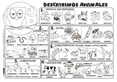 BN P describe Animals Teaching Time, Teaching Spanish, Teaching Science, Science For Kids, Science And Nature, Animal Worksheets, Fun Worksheets, Spanish Classroom Activities, Book Activities
