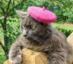 My little lady would love this beret.