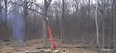 Tree takes revenge on guy chopping down the tree by throwing him off