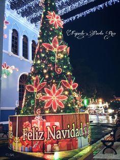 Arbol de Navidad Situado en los predios entre la alcaldia con motivo de las fiestas navideñas en el Pueblo de Fajardo Puerto Rico.2015