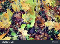 Find Leaves Texture stock images in HD and millions of other royalty-free stock photos, illustrations and vectors in the Shutterstock collection. Thousands of new, high-quality pictures added every day. Leaf Texture, My Photos, Photo Editing, Royalty Free Stock Photos, Leaves, Illustration, Pictures, Painting, Image