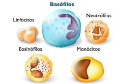 O que significa basófilos aumentados?