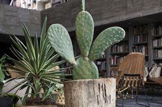 Building Beauty From Brutalism: Pedro Reyes and Carla Fernández — Freunde von Freunden