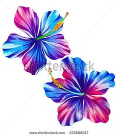 tropical hibiscus. exotic flower watercolor illustration - stock photo