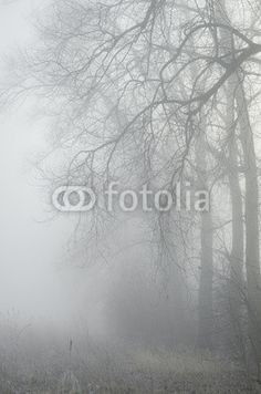 trees in misty forest - wall murals