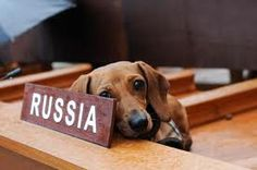 My Frankie as the Russian delegate at Dachshund UN at the MCA