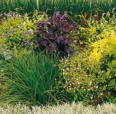 Pestovanie byliniek v záhrade Plants, Buxus, Pictures, Plant, Planets