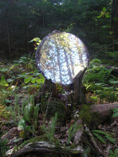crystal ball....love the way it is placed in an old tree stump and the way it reflects the trees