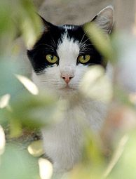 Save Feral Cats  Most of them come around and can be tamed. It just takes a lot of time and patience.