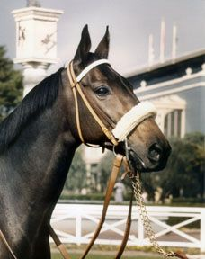 John Henry- small, mean, ugly, and destined for failure. Yet he had the heart of a champion and defied all the odds.  Definitely one of racings best geldings
