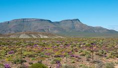 Tanqua Karoo, Northern Cape, South Africa