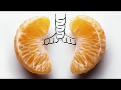 lungs - Google Search
