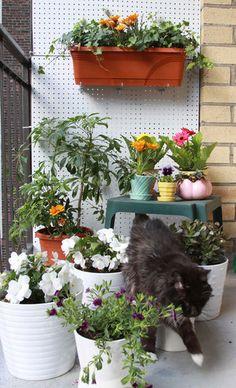 jardins pequenos...