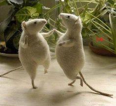 DEDETIZADORA TSERV : Não deixe os ratos fazerem a festa, antes faça uma... tserv.com.br