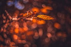Autumn in Vienna, Austria by Patrycja Kasprzycka   www.kasprzycka.at   Instagram @p.kasprzycka   #fall #autumn #city #travel #leaves #bokeh #trees #vacation #sun #vienna #austria #photography #europe #shadow Vienna Austria, Autumn, Fall, Bokeh, Trees, Europe, Leaves, Graphic Design, Sun