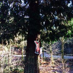 Fox Gruffalo Trail, Fox, Foxes, Red Fox