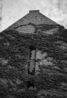 Vine wall Fuji GW690III 6x9 Professional Fuji Neopan Acros 100 expired in 2006 shot at ISO 50 developed with LC29 129 20deg 8min wall brick vine virginia creeper windows clouds monochrome blackandwhite mediumformat analog film 6x9 120 buyfilmnotmegapixels filmisnotdead