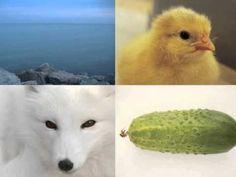 Kinderliedje met beeld: Alles heeft een kleur Music For Kids, School, Animals, Vocabulary, Animales, Animaux, Animal, Animais