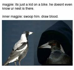 15 Times Australians Were Personally Victimised By Magpies