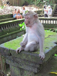 It's true. Monkeys are everywhere in Bali