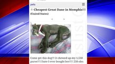 Conflicting stories as to whether the dog is really safe continue to circulate amid social media.