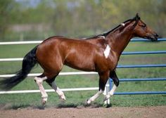 America)) A wild mare who doesn't like to listen to orders. She believes in freedom and loves the meadow, she hates Farley.