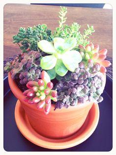 #Succulents www.barendsen.nl