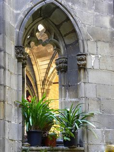 Barcelona Cathedrals's Cloister: very special place. Gothic Cathedral, Spain And Portugal, Gaudi, Art And Architecture, Barcelona Cathedral, Windows, Cathedrals, Travelling, Beautiful