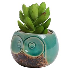 MyGift Small Owl Ceramic Succulent Planter, Flower Pot Vase, Turquoise and Brown >>> Find out more about the great product at the image link. (This is an affiliate link) #DecorativeAccessories