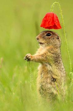Un parapluie aussi adorable que fragile, pour un écureuil aussi adorable que malin. Au nord-est de l'Autriche.