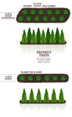 Need privacy trees to help block out your neighbor? Our privacy trees are the perfect solution! Pick and order your fresh privacy trees online today for FAST delivery! Privacy Landscaping, Home Landscaping, Front Yard Landscaping, Privacy Fences, Arborvitae Landscaping, Privacy Plants, Farmhouse Landscaping, Landscaping With Trees, Landscaping Design