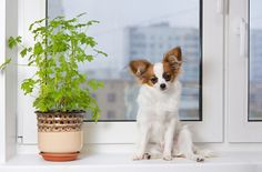 Outdoor And Indoor Plants: Poisonous Plants For Dogs