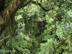 forest images  | ... jungle there are two types of rainforest tropical rainforest and