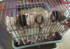 """""""Our little prisoners"""" my husband used to call them. They always want your attention, and to be by you. I hope these guys also have a bigger cage. Funny Rats, Cute Rats, Rat Care, Baby Animals, Cute Animals, Animals Of The World, Pink Eyes, Rodents, My Animal"""