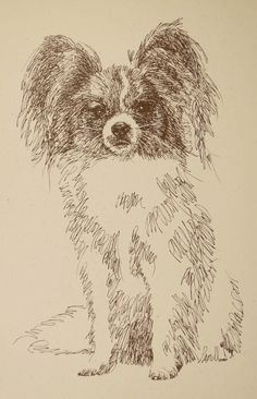 Papillon: Dog Art Portrait by Stephen Kline. Art drawn entirely from the word Papillon. He also can add your dog's name into the lithograph. : drawdogs.com http://drawdogs.com/product/dog-art/papillon-dog-portrait-by-stephen-kline/ His collectors number in the thousands from over 20 countries and every state in the US. Kline's dog art has generated tens of thousands of dollars for dog rescues worldwide.