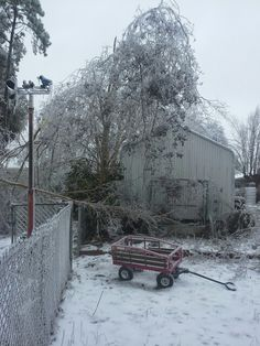The crepe myrtles feel on my bootleg swing turned trellis. I pulled out of, holy shit, branches covered with ice ain't no joke. It was sooo heavy