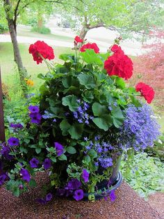 Front Porch Flowers - Add white geraniums for Americana Theme. Container Flowers, Container Plants, Container Gardening, Gardening Vegetables, Plant Containers, Gardening Tools, Gardening Gloves, Beautiful Gardens, Beautiful Flowers
