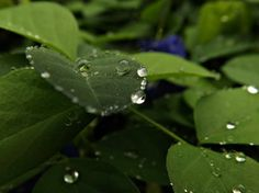 sweet drop Photo by jose valdemar caruso -- National Geographic Your Shot National Geographic Photos, Your Shot, Amazing Photography, Plant Leaves, Shots, Drop, Sweet, Plants, Candy