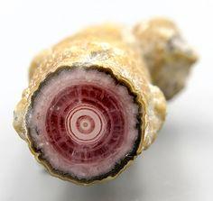 Minerals, Crystals & Fossils - Rhodochrosite Stalactite - Argentina
