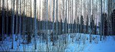 Metsä Wood Schweiz
