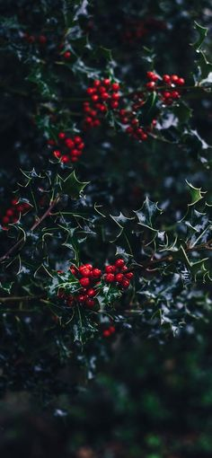 50+ Free Stunning Christmas Wallpaper Backgrounds For iPhone