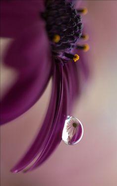 Waterdrop on petals..