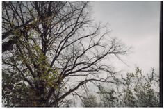 Marta Nowak - Lomografia 2014 #lomo #photo #komwiz #tree