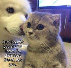 Don't listen to the dog kitty.you're my best best best friend everrr
