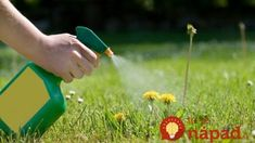 Household vinegar and other concentrations of acetic acid are inexpensive, organic weed killers. Here are some tips for getting the best weed control. Garden Weeds, Lawn And Garden, Garden Tools, Kill Weeds With Vinegar, Organic Gardening, Gardening Tips, Gardening Supplies, Killing Weeds, Weed Killer Homemade