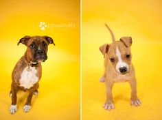 Pawsitively Pictures :: Pet Photography :dogs